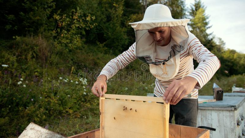 Beekeeper stands near the hives holding bee frame in which there is a honeycomb. Beekeeper in special clothes stands near the hives and holds a bee frame in royalty free stock photos