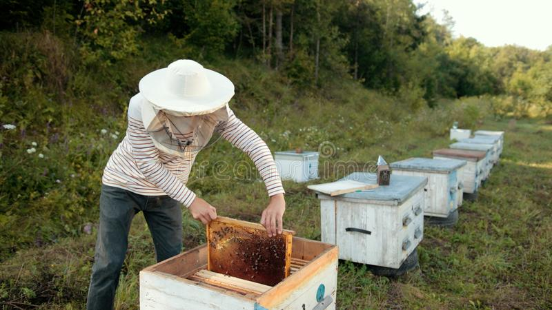 Beekeeper stands near the hives holding bee frame in which there is a honeycomb. Young beekeeper in special clothes stands near hives and holds a bee frame in royalty free stock photo
