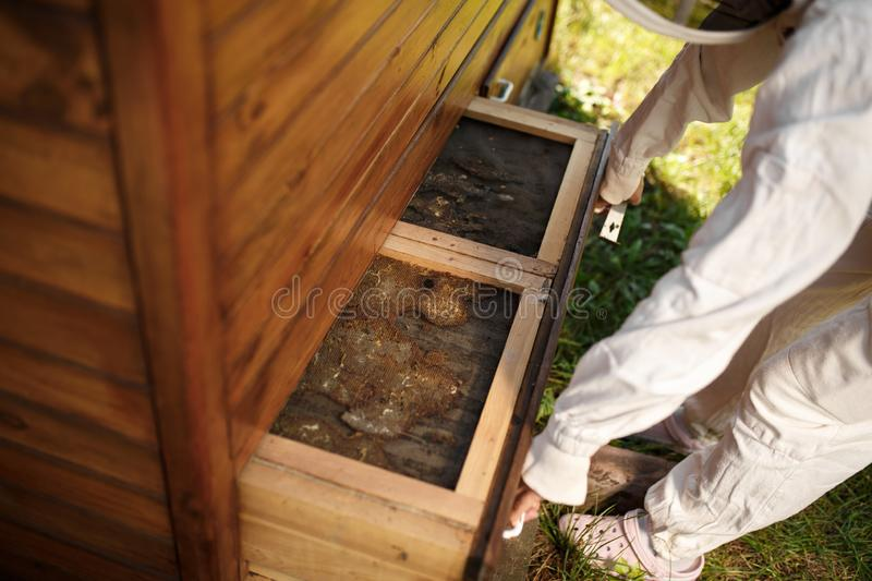 Beekeeper in suit is working at apiary. Opening wooden beehive Apiculture concept royalty free stock photo
