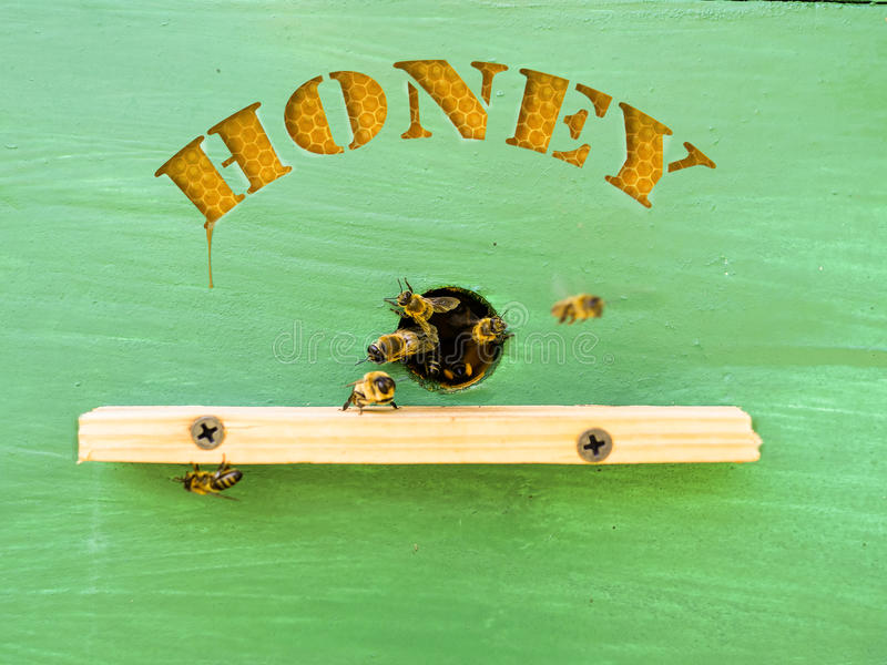 Beekeeper treats honey from the hives. royalty free stock images