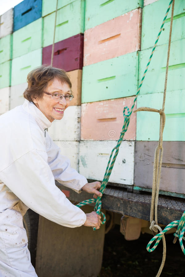 Beekeeper Tying Rope To Crates Loaded On Truck. Happy female beekeeper tying rope to stacked honeycomb crates loaded on truck stock photos