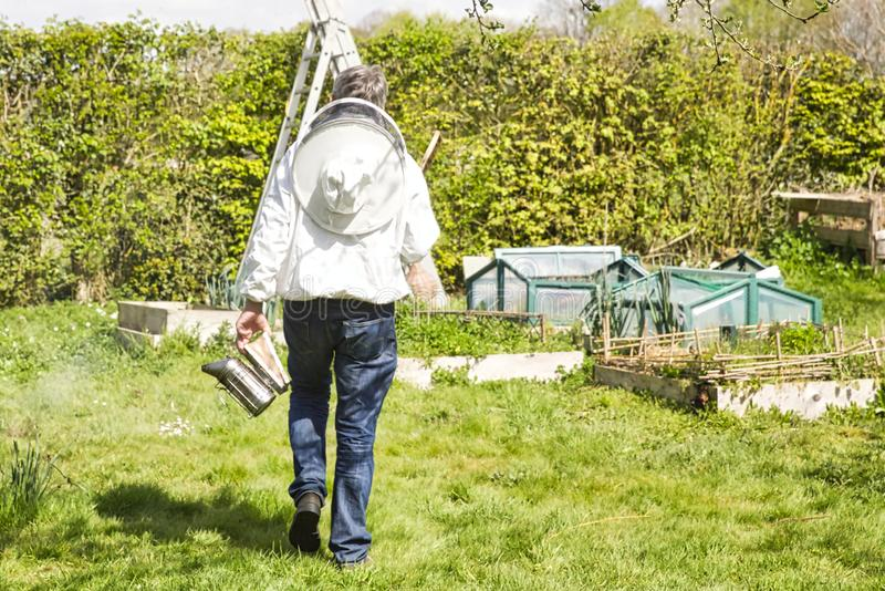 Beekeeper walking and inspecting his row of beehives near blossoming field stock photography