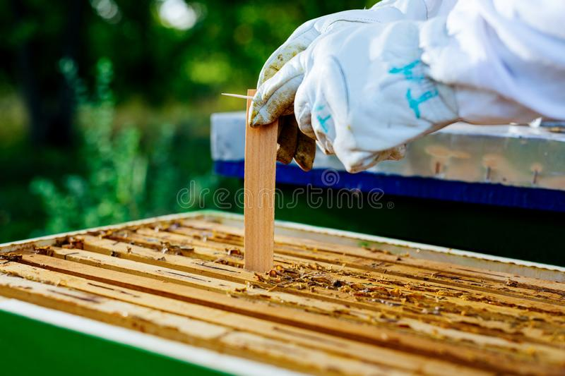 Beekeeper is working with bees and beehives on the apiary royalty free stock photo