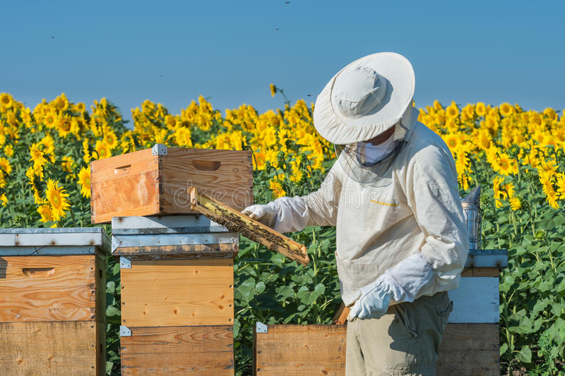 Beekeeper working royalty free stock image