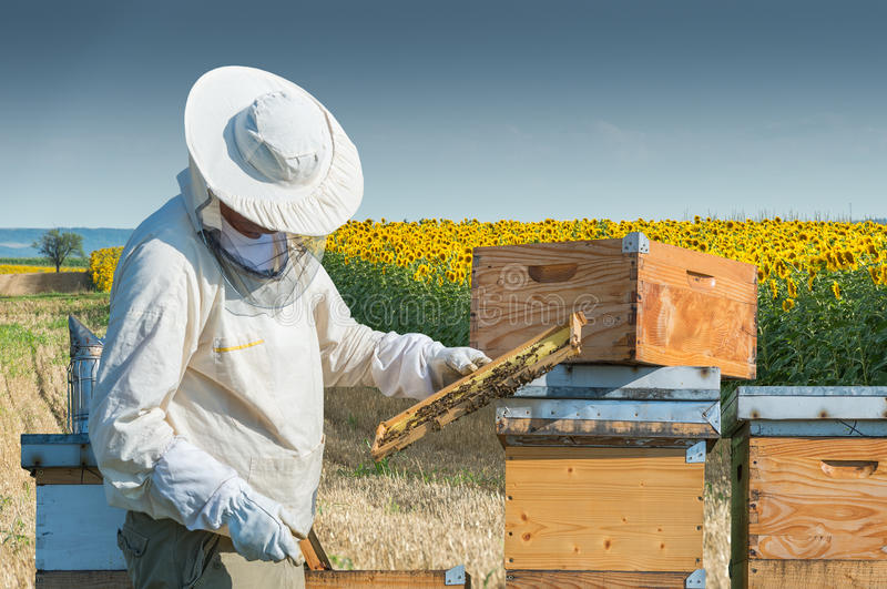 Beekeeper working stock image