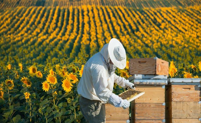 Beekeeper working royalty free stock photos