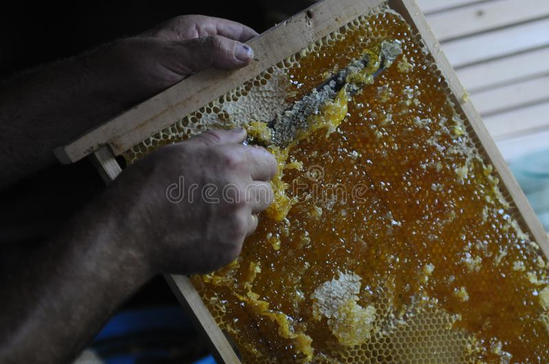A beekeeper works with the bees and the hives in the apiary. a man in a protective suit at the apiary. Employee pulls the frame fr stock image