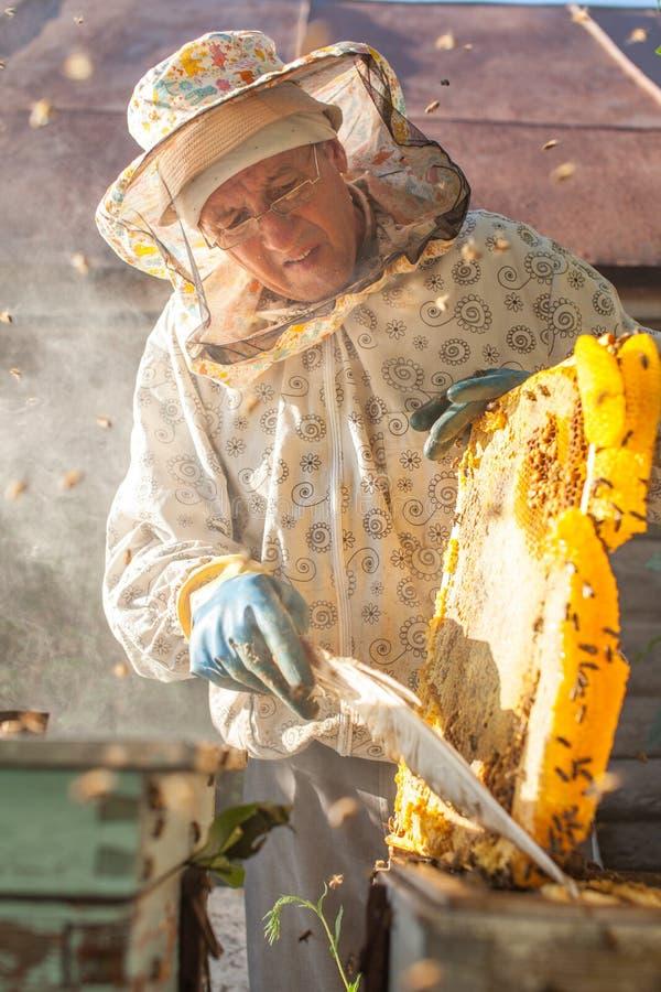 Beekeeperen sköter bin, honungskakor, mycket honung, i ett skyddande begrepp för fä för beekeeper` s: bibikupa, ren naturlig pr arkivfoton