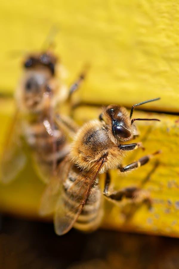 Beekeepers куря крапивницу стоковое изображение