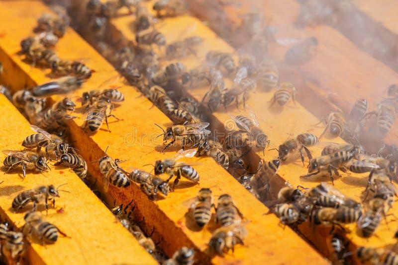 Beekeepers куря крапивницу Пчелы и дым стоковое изображение
