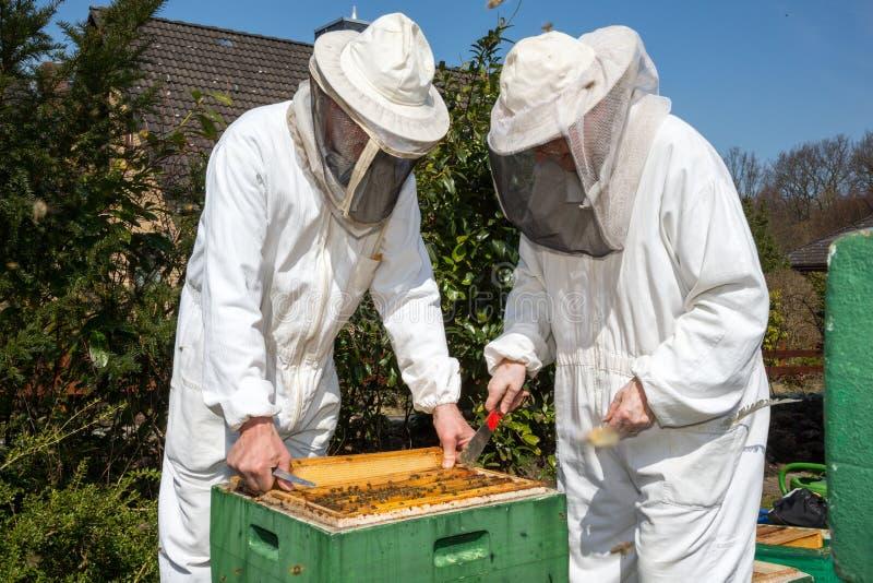 2 beekeepers поддерживая крапивницу пчелы стоковое изображение rf