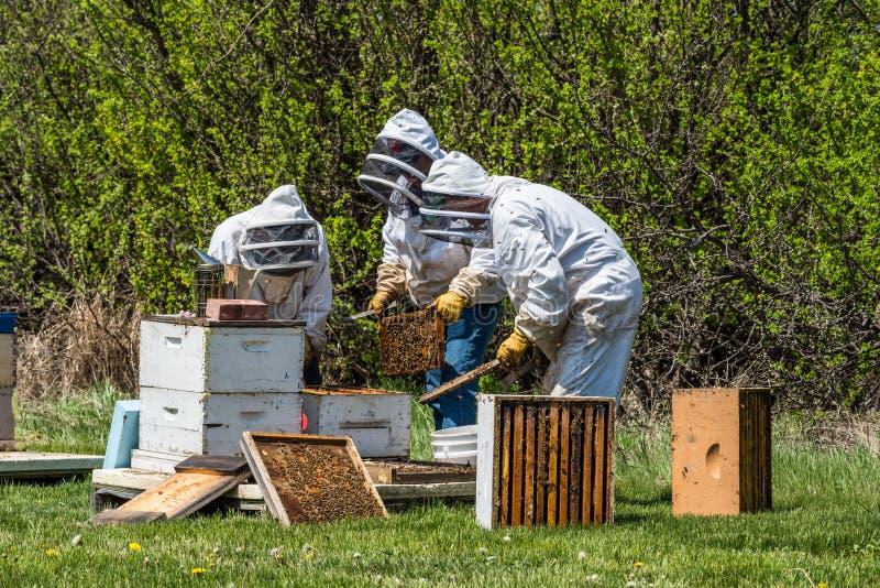 3 beekeepers проверяя подносы выводка от улья стоковые изображения