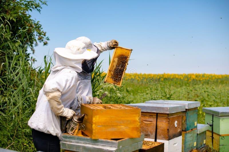 Beekeepers проверяя соты стоковое фото rf