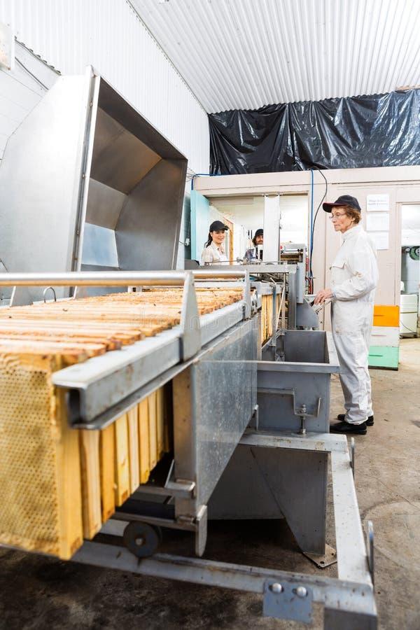Beekeepers работая на заводе извлечения меда стоковое изображение