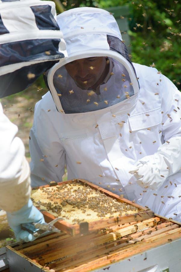 2 beekeepers работая на крапивнице стоковая фотография rf