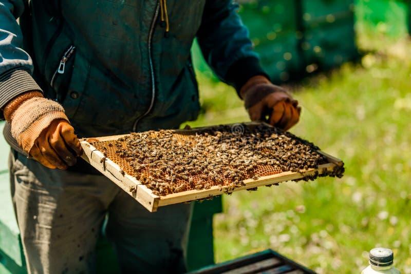 Beekeepers собирают мед стоковое изображение