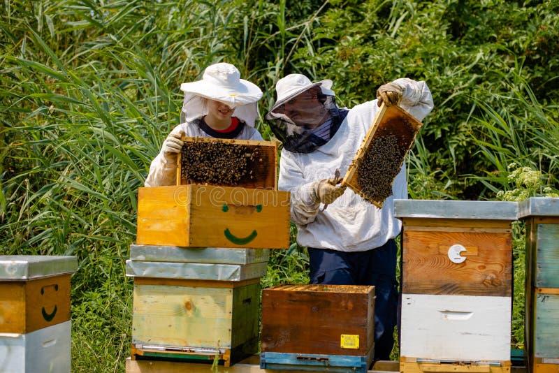 Beekeepers, человек и женщина проверяют соты стоковые фотографии rf