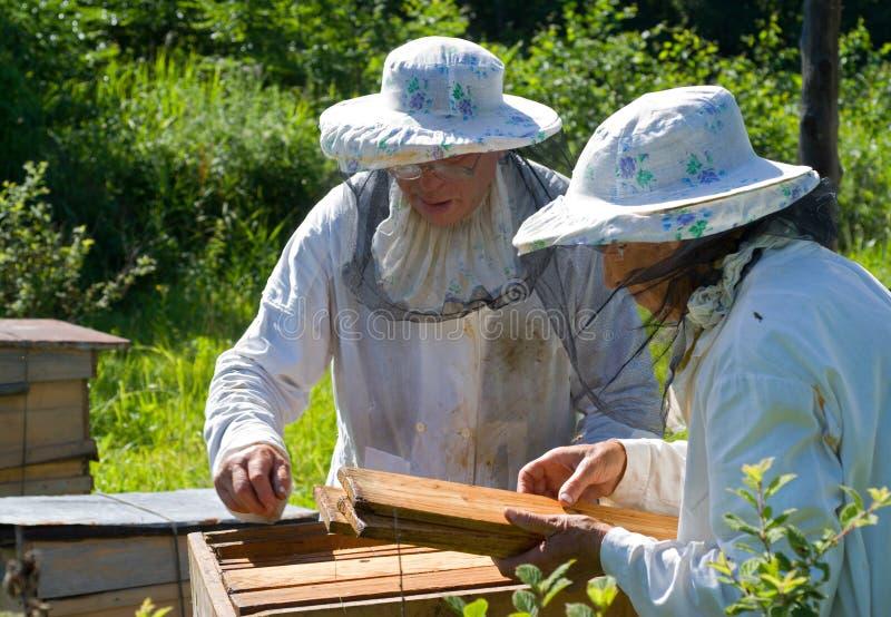 beekeepers 1 стоковые изображения rf
