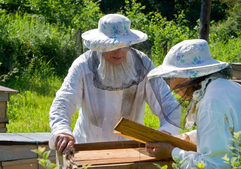 Beekeepers 4 стоковое фото