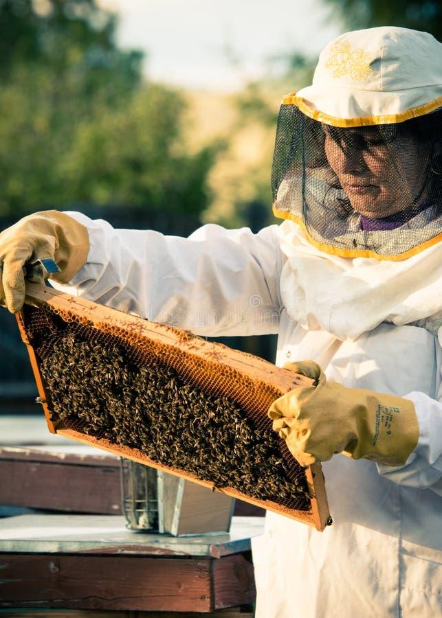 beekeepers στοκ φωτογραφίες