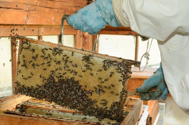 beekeepers στοκ φωτογραφίες με δικαίωμα ελεύθερης χρήσης