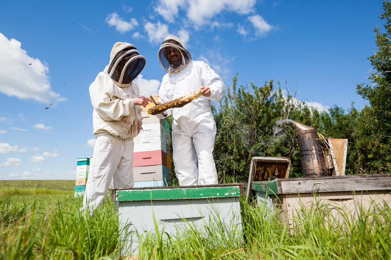 Beekeepers Examining Honeycomb At Apiary. Beekeepers in protective workwear examining honeycomb together at apiary royalty free stock images