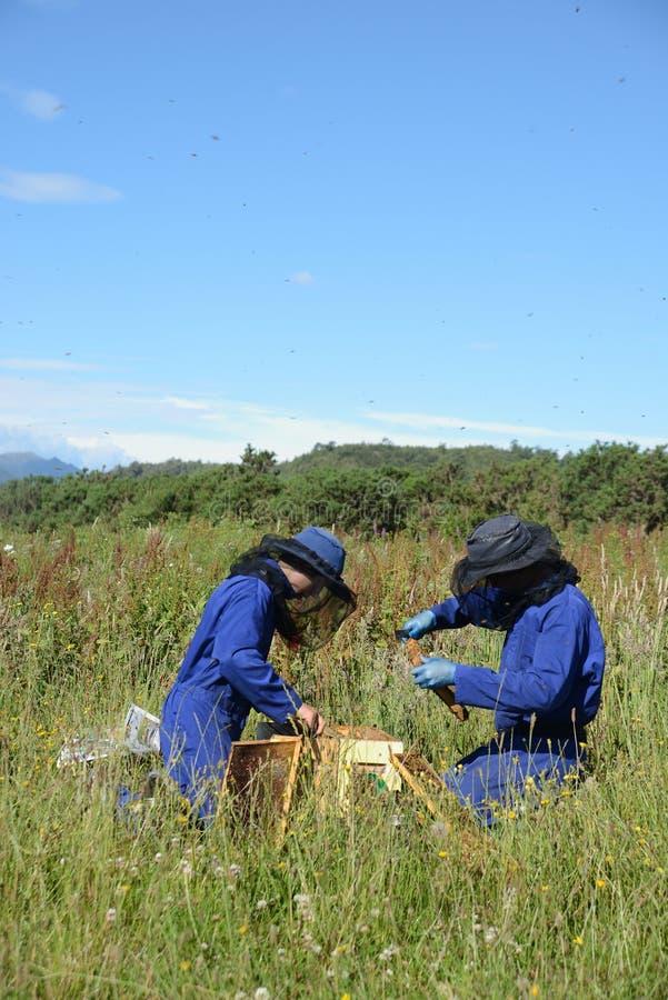 Beekeepers på arbete på en solig dag royaltyfria bilder