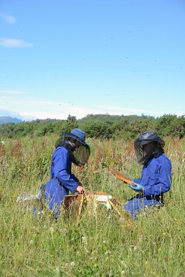 Beekeepers på arbete på en solig dag arkivbilder