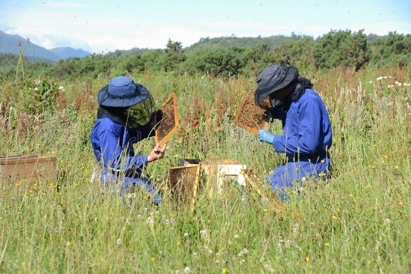 Beekeepers på arbete på en solig dag arkivbild