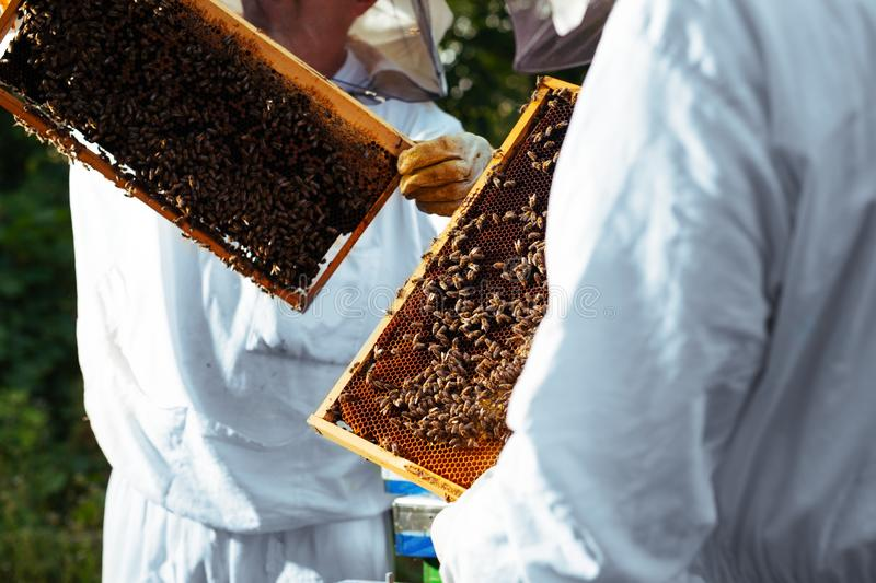 Beekeepers at work collecting honey outdoors. stock photography