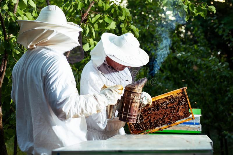 Beekeepers at work collecting honey outdoors. stock photo