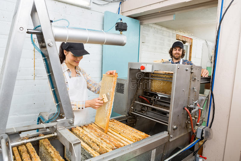 Beekeepers Working At Honey Extraction Plant stock photos