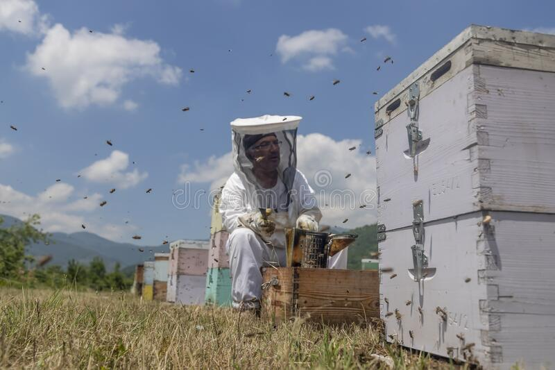 Beekeepers working to collect honey stock photography