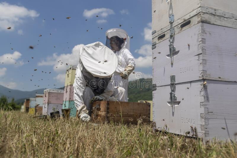 Beekeepers working to collect honey stock image