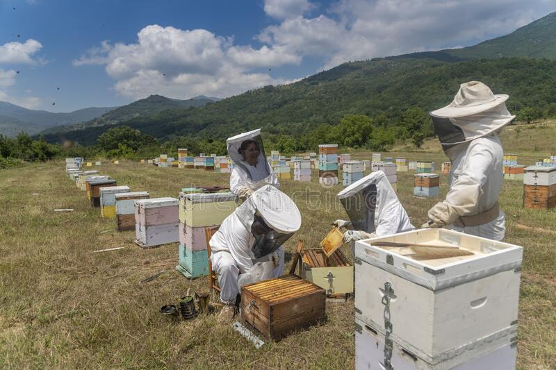 Beekeepers working to collect honey royalty free stock images