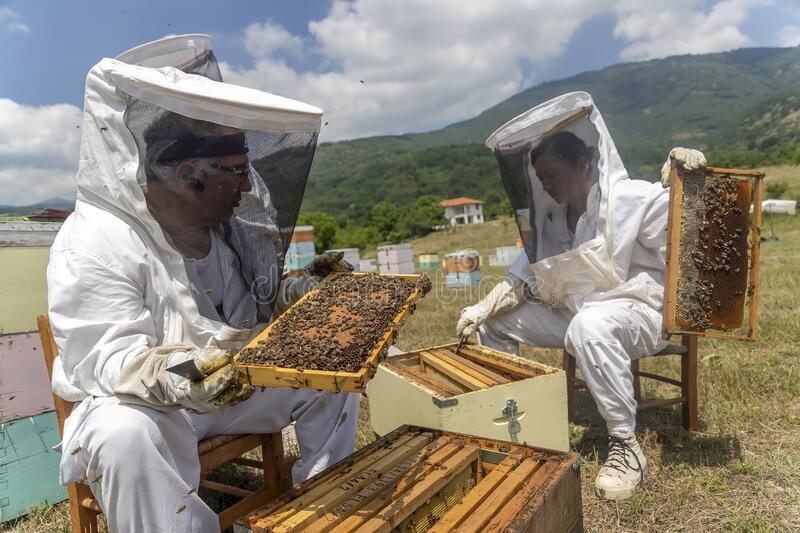 Beekeepers working to collect honey royalty free stock photography