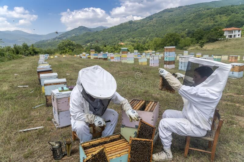 Beekeepers working to collect honey royalty free stock photo