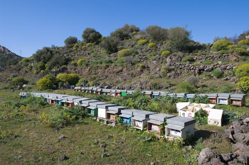 beekeeping fotografia stock