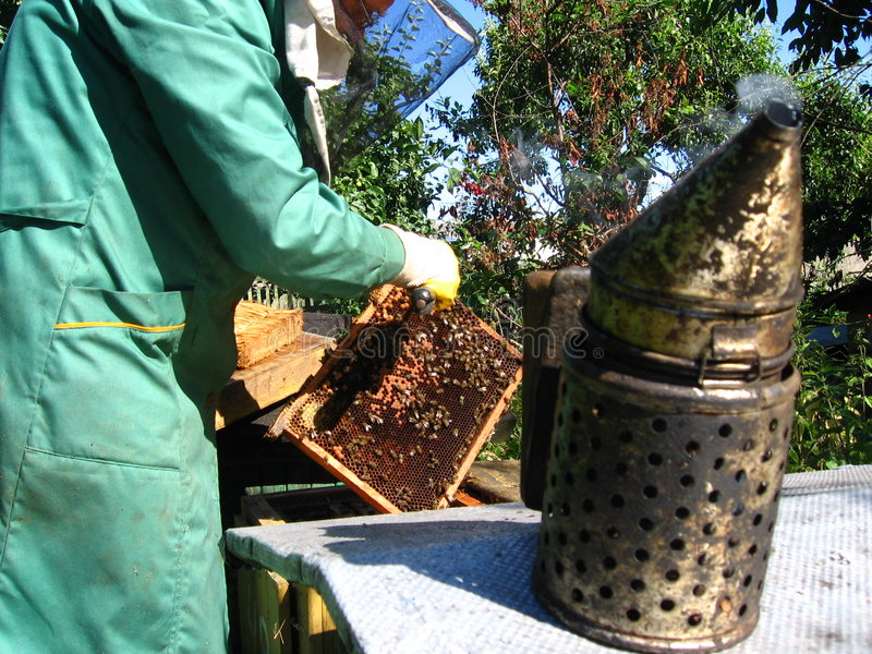 Beekeeping. A beekeeper at work on his hive royalty free stock image
