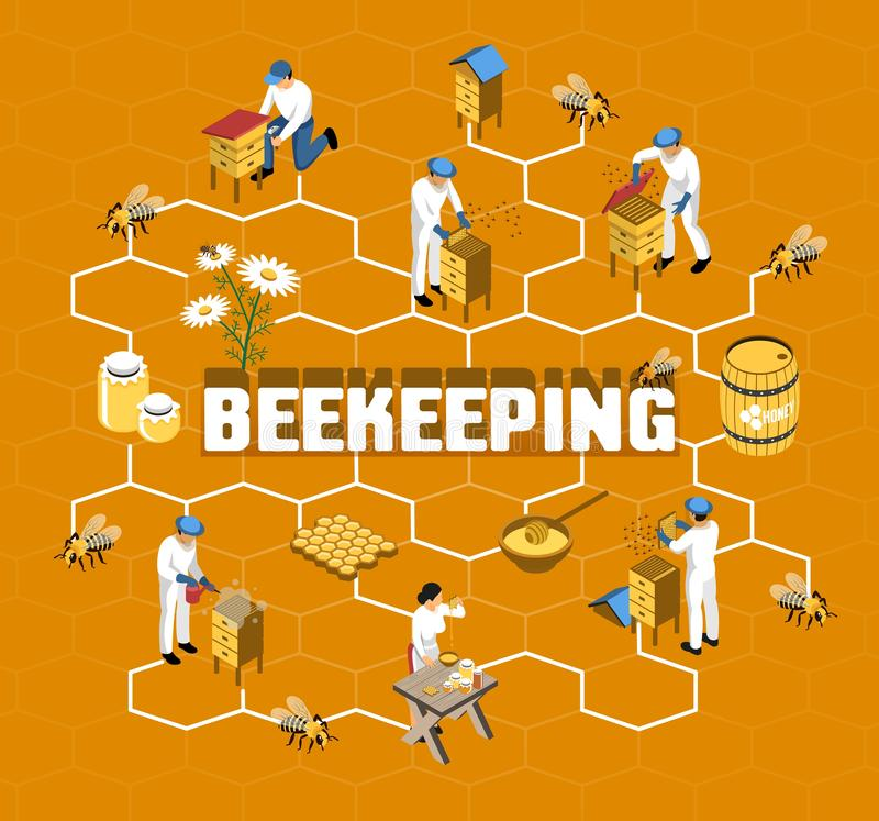 Beekeeping Isometric Flowchart. With farmers in protective clothing during honey production on orange background vector illustration stock illustration