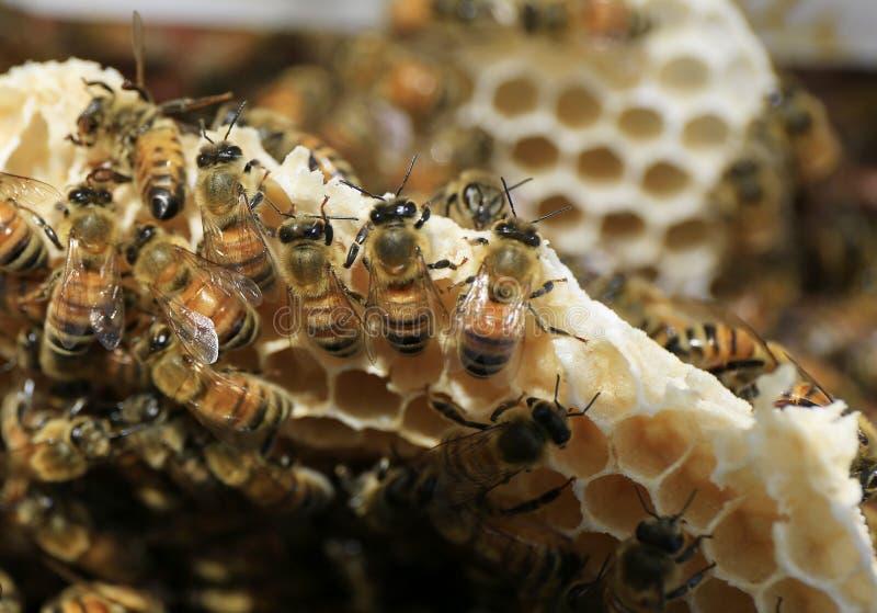 Beekeeping przy Wietnam fotografia royalty free