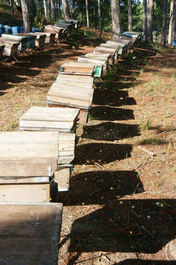Beekeeping przy Wietnam, ul, pszczoła miód obraz royalty free
