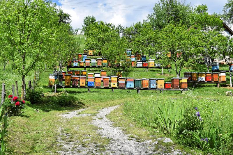 Beekeeping in rural yard during spring stock photos