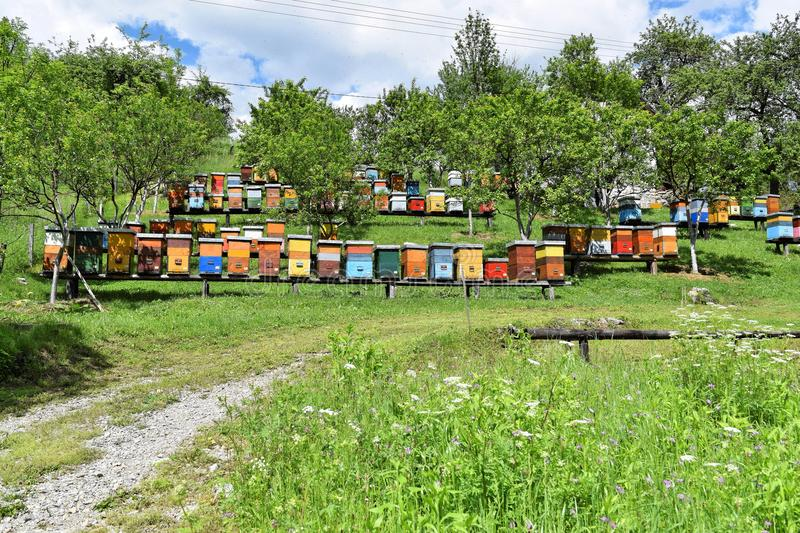 Beekeeping in rural yard during spring royalty free stock images