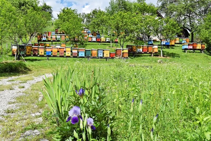 Beekeeping in rural yard during spring stock photography