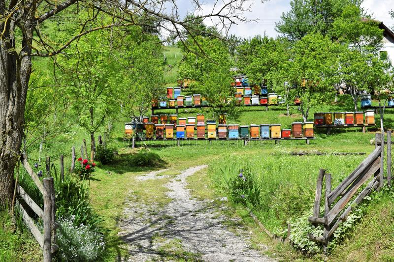 Beekeeping in rural yard during spring stock photo