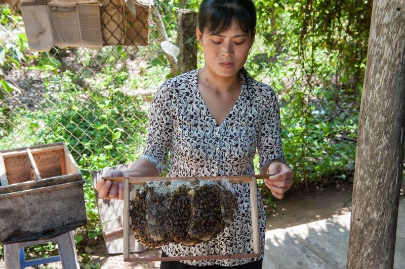 Beekeeping w Mekong delcie obraz royalty free