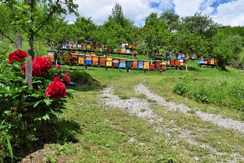 Beekeeping w wiejskim jardzie podczas wiosny fotografia stock