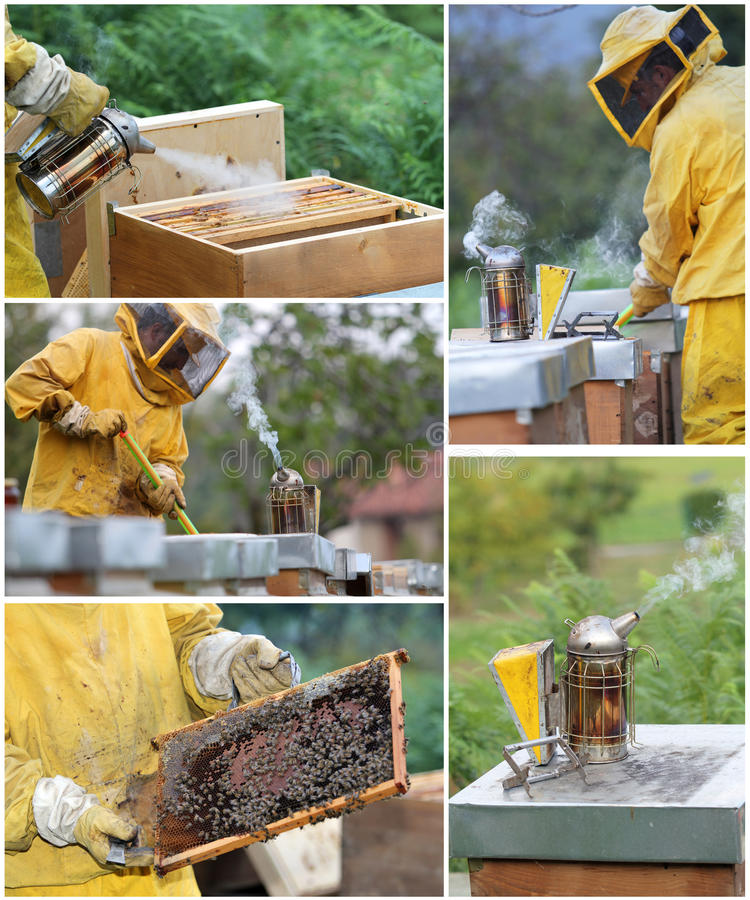 Beekeepingcollage royaltyfri foto