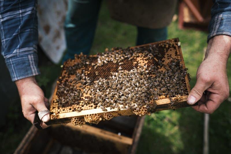 Beekeper werkt met honingraten wat volledig door bijen wordt behandeld Detail op apiarist royalty-vrije stock afbeeldingen